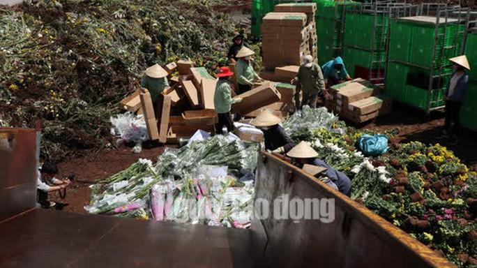 Hàng vạn cành hoa Đà Lạt xuất khẩu sang Úc buộc phải tiêu hủy - Ảnh 4.