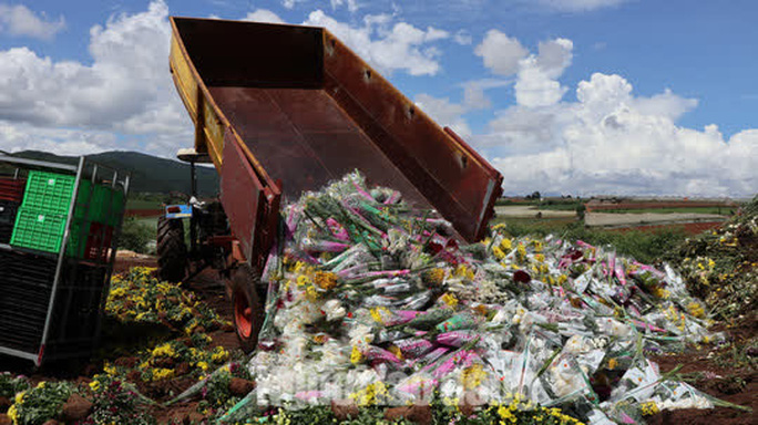 Hàng vạn cành hoa Đà Lạt xuất khẩu sang Úc buộc phải tiêu hủy - Ảnh 5.