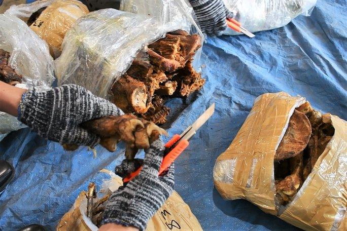 Hải quan Đà Nẵng bắt 3,2 tấn hàng nghi sừng tê giác, xương động vật hoang dã từ Nam Phi - Ảnh 2.
