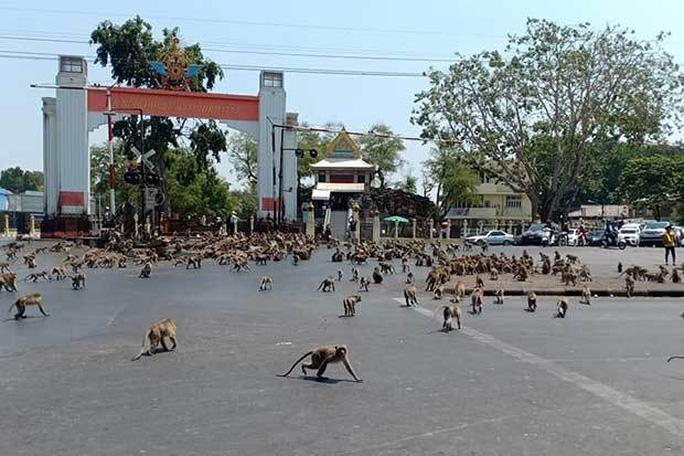 Thái Lan: Tài xế sốc trước hàng trăm con khỉ ẩu đả giữa đường - Ảnh 5.
