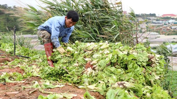 Xót xa nông dân Đà Lạt nhổ bỏ hàng chục tấn rau, hoa vì không bán được - Ảnh 4.