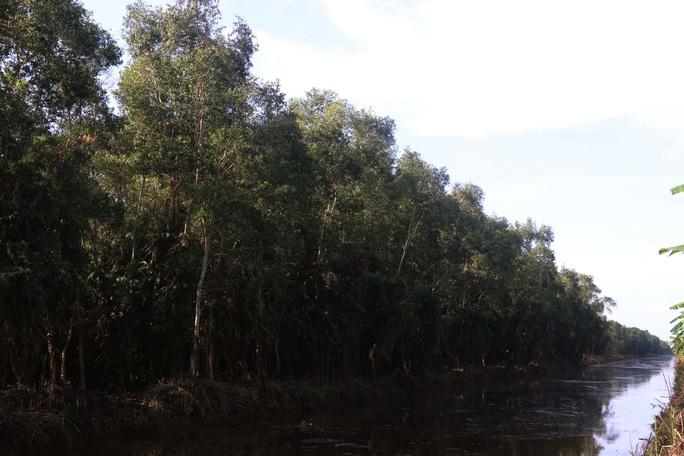 Bí quyết tạo nên đặc sản lẩu mắm rừng U Minh - Ảnh 1.