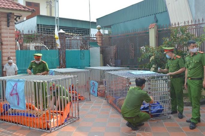Khởi tố bị can, bắt tạm giam người nuôi nhốt 14 con hổ tại nhà - Ảnh 1.