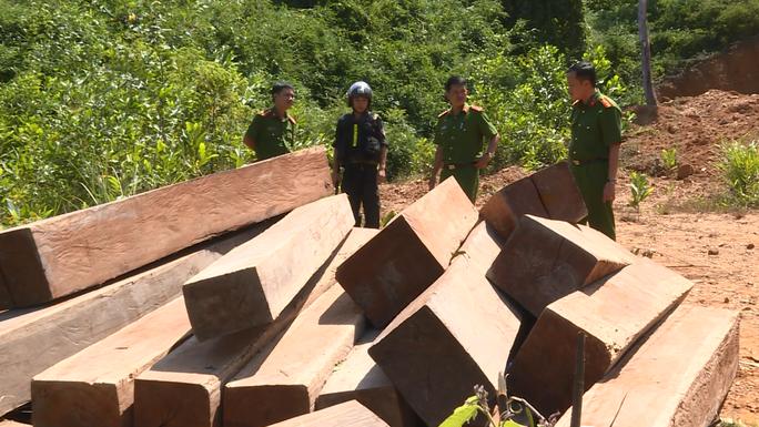 Thờ ơ, để mất hơn 300 ha rừng, 9 cán bộ - nhân viên bảo vệ rừng bị truy tố - Ảnh 1.