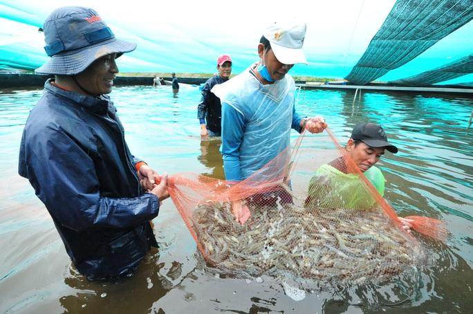 ĐBSCL: Nhiều loại nông sản, thủy sản giữ giá ổn định - Ảnh 1.