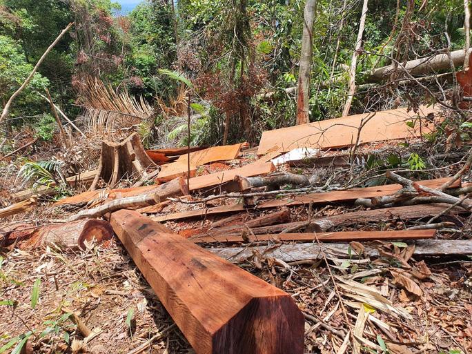 Cận cảnh tàn phá rừng nghiêm trọng ở Đắk Lắk - Ảnh 3.