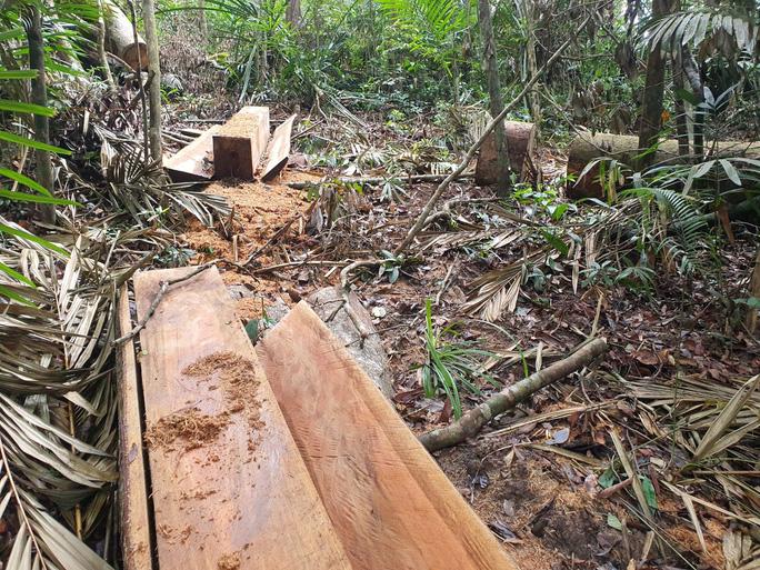 Cận cảnh tàn phá rừng nghiêm trọng ở Đắk Lắk - Ảnh 2.