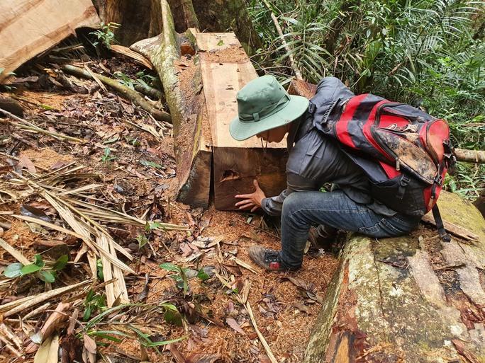 Cận cảnh tàn phá rừng nghiêm trọng ở Đắk Lắk - Ảnh 4.