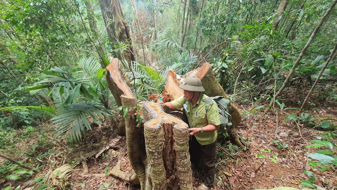 Cận cảnh tàn phá rừng nghiêm trọng ở Đắk Lắk - Ảnh 6.