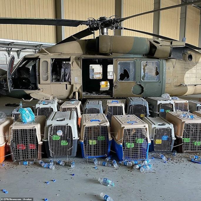 Mỹ bỏ rơi chó nghiệp vụ ở lại Afghanistan? - Ảnh 1.