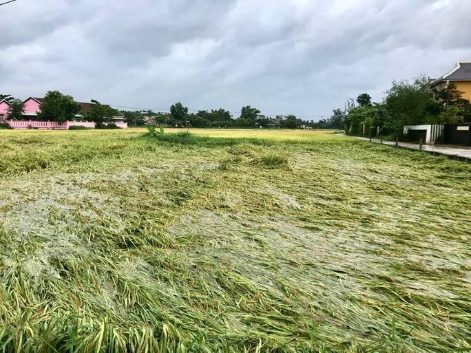 Miền Trung đang mưa tầm tả, ruộng lúa ngã đổ, 1 tàu gặp nạn - Ảnh 2.