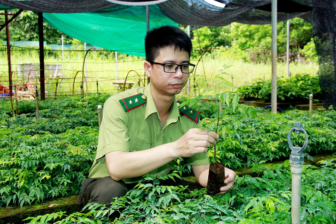 Khôi phục rừng lim xanh ở xứ Thanh - Ảnh 1.