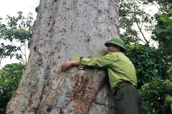 Khôi phục rừng lim xanh ở xứ Thanh - Ảnh 4.