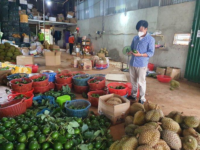 Nông dân lo lắng vì yêu cầu tạm dừng mua bán sầu riêng, bơ khi đang thu hoạch - Ảnh 1.