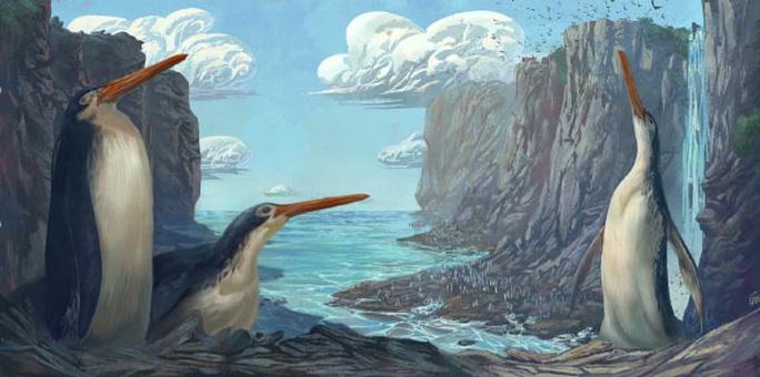 Phát hiện chim cánh cụt khổng lồ cao bằng con người - Ảnh 1.