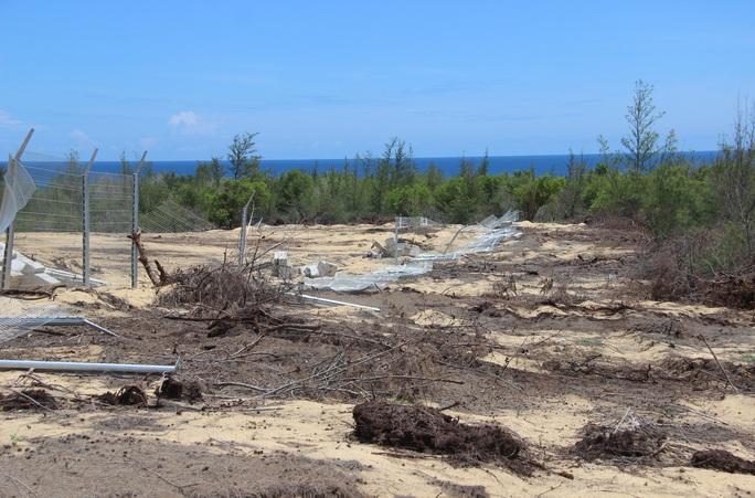 Phá 5,26 ha rừng phòng hộ ven biển, doanh nghiệp chỉ bị đề xuất phạt hành chính - Ảnh 2.