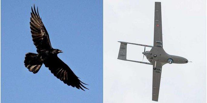 Sát thủ bất ngờ hạ gục drone của Google - Ảnh 2.