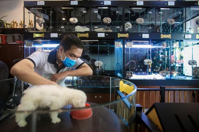 Choáng ngôi nhà 5 sao của thú cưng Sài Gòn - Ảnh 3.