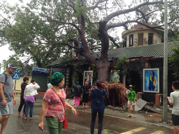 Bão số 12 tan, Khánh Hòa tan hoang, ít nhất 11 người chết - Ảnh 4.