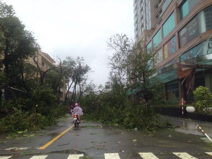 Bão số 12 tan, Khánh Hòa tan hoang, ít nhất 11 người chết - Ảnh 8.