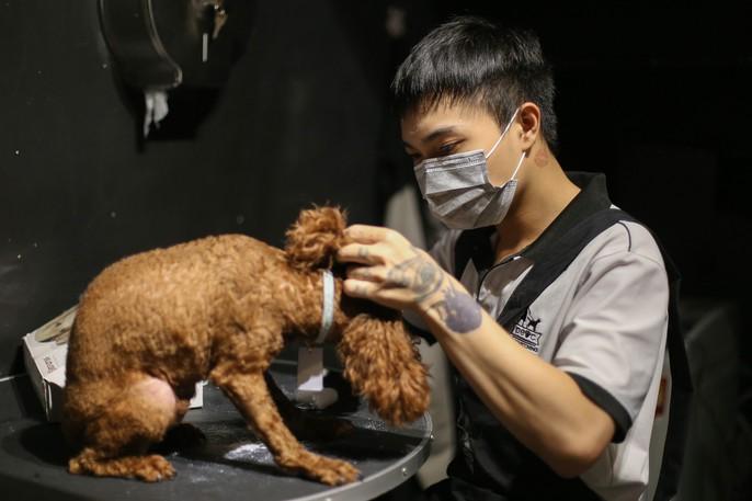 Choáng ngôi nhà 5 sao của thú cưng Sài Gòn - Ảnh 14.
