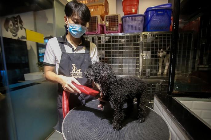 Choáng ngôi nhà 5 sao của thú cưng Sài Gòn - Ảnh 13.