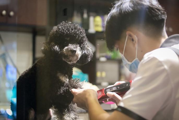 Choáng ngôi nhà 5 sao của thú cưng Sài Gòn - Ảnh 9.