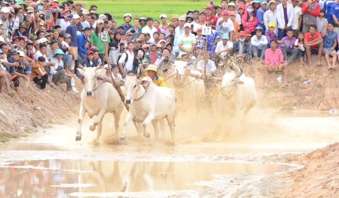 Lý do khiến cả rừng người đến xem đua bò Bảy Núi - Ảnh 10.