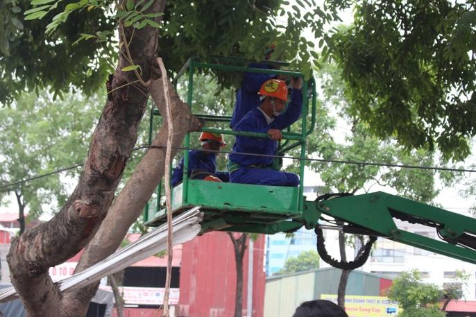 Bắt đầu chặt hạ gần 1.300 cây xanh trên đường Phạm Văn Đồng - Ảnh 2.