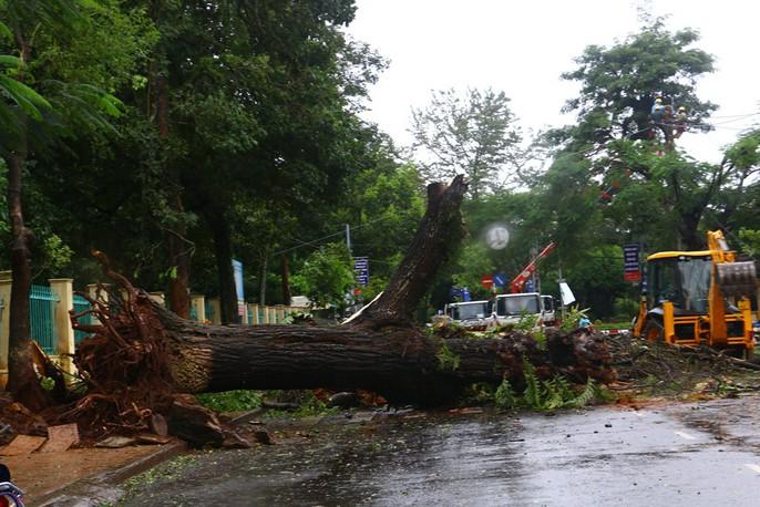 Cận cảnh Tây Nguyên tan hoang sau bão số 12 - Ảnh 14.