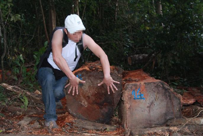 Cận cảnh công trường khai thác gỗ lậu khủng ở Đắk Lắk - Ảnh 3.