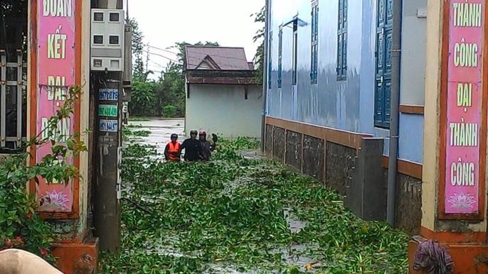 Cận cảnh Tây Nguyên tan hoang sau bão số 12 - Ảnh 10.