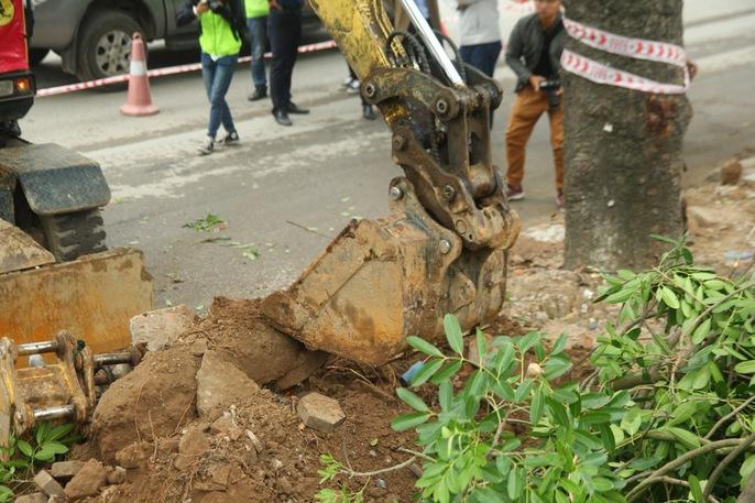 Bắt đầu chặt hạ gần 1.300 cây xanh trên đường Phạm Văn Đồng - Ảnh 9.