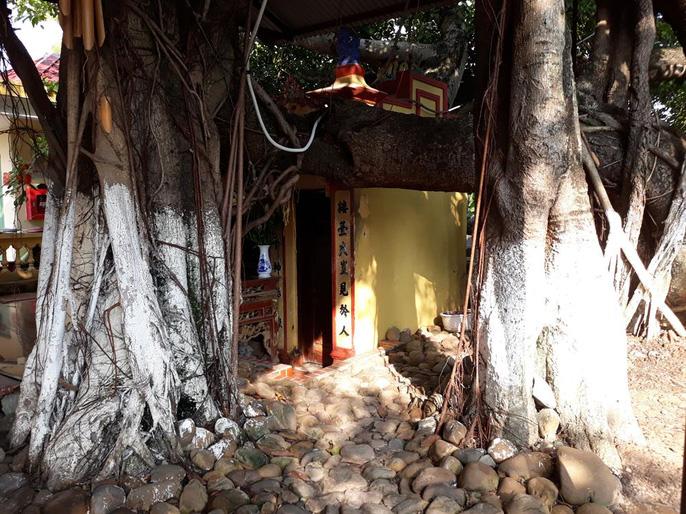 Đến xem cây đa cổ thụ có 13 gốc ở Hải Phòng - Ảnh 5.