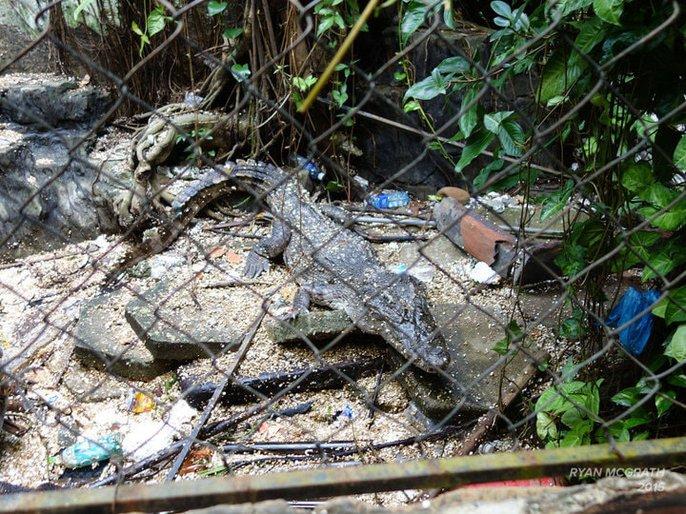 Khách nước ngoài đổ đến công viên nước bỏ hoang ở Huế - Ảnh 7.
