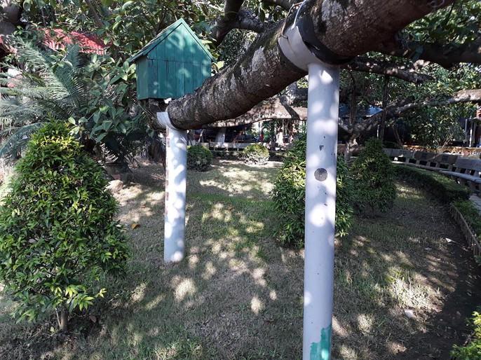 Đến xem cây đa cổ thụ có 13 gốc ở Hải Phòng - Ảnh 9.