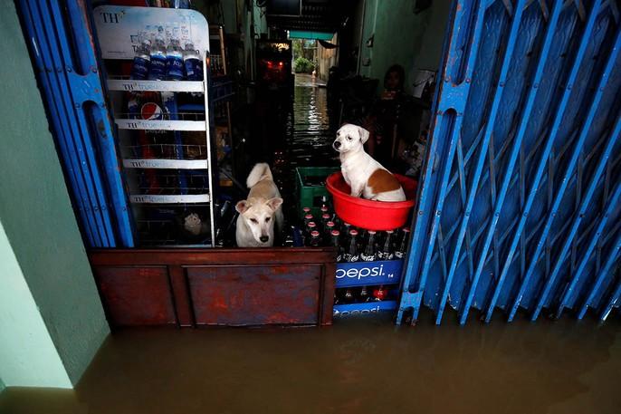 Hình ảnh lũ lụt miền Trung ngập tràn báo chí nước ngoài - Ảnh 6.