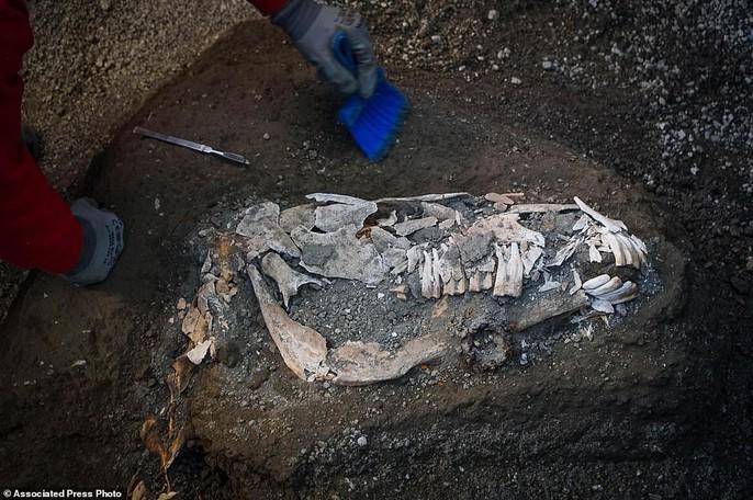 Bí ẩn ngựa đá từng có sự sống trong hầm mộ 2.000 năm - Ảnh 4.