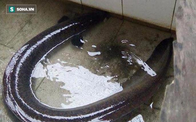 Bí ẩn miền Tây xứ Nghệ: Loài cá nặng hàng yến, dài cả mét - Ảnh 18.