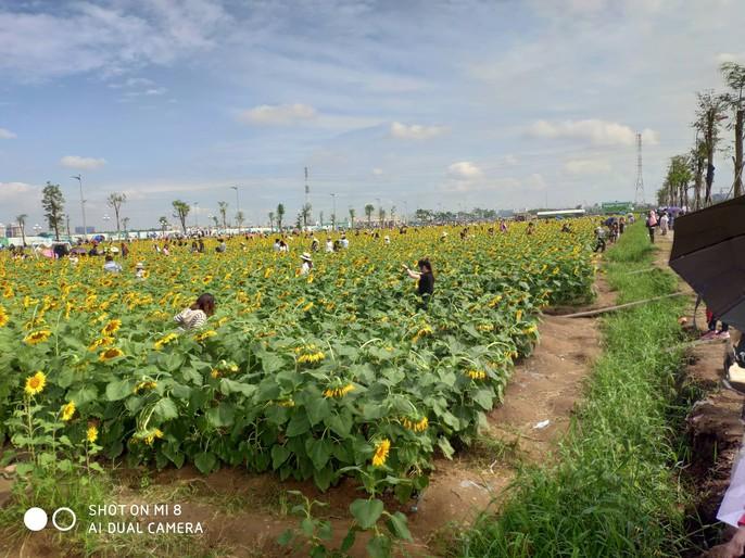 [VIDEO] - Nườm nượp đi xem cánh đồng hoa hướng dương ven sông Sài Gòn - Ảnh 2.