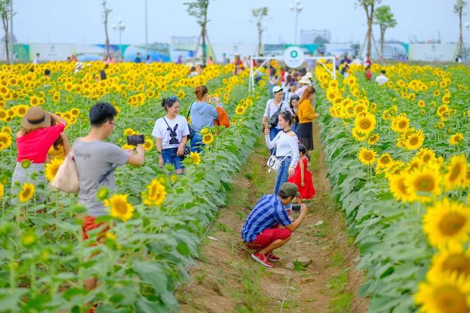 [VIDEO] - Nườm nượp đi xem cánh đồng hoa hướng dương ven sông Sài Gòn - Ảnh 10.