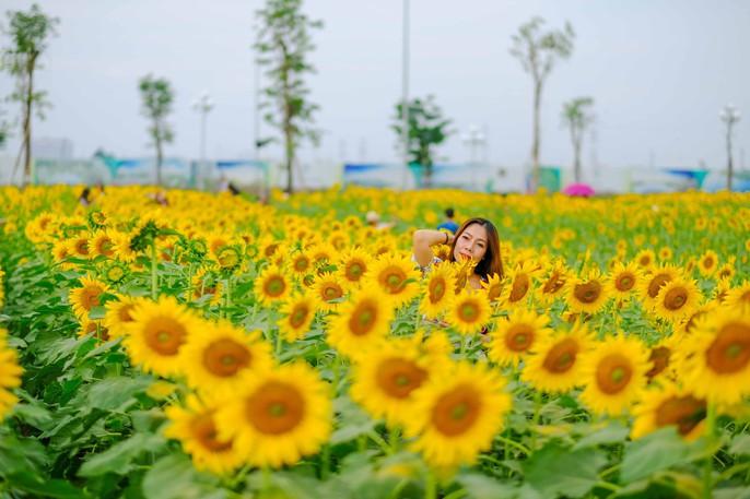 [VIDEO] - Nườm nượp đi xem cánh đồng hoa hướng dương ven sông Sài Gòn - Ảnh 9.