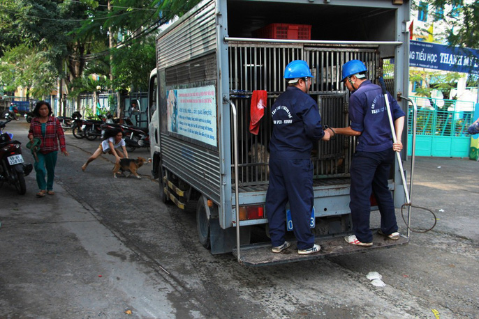 """Biệt đội """"săn"""" chó thả rông ở Sài thành - 7"""