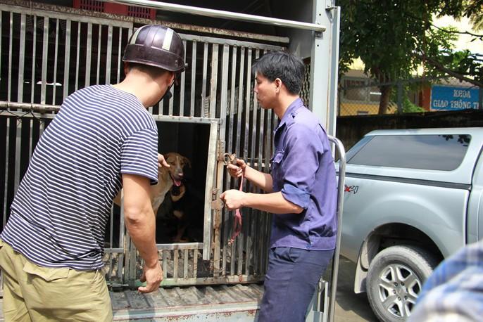 Biệt đội săn chó thả rông ở Sài thành - Ảnh 11.