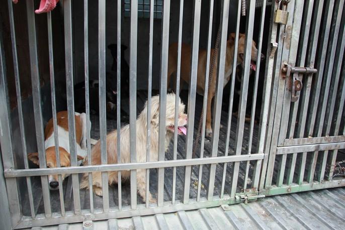 Biệt đội săn chó thả rông ở Sài thành - Ảnh 10.