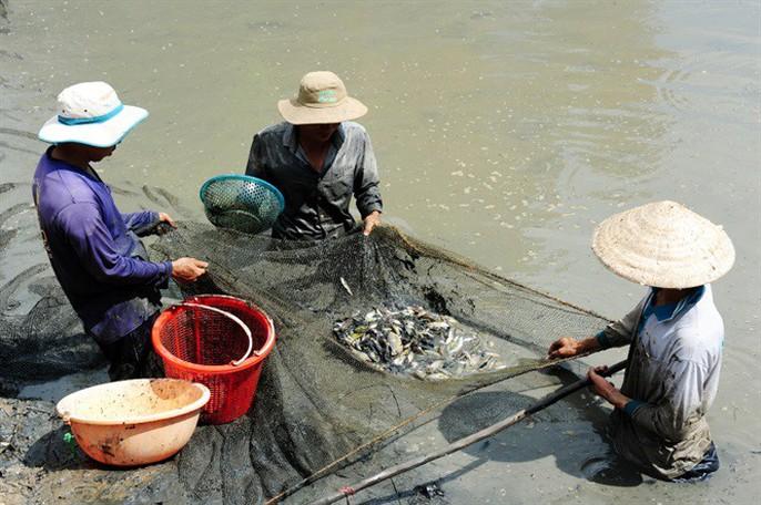 Sướng mắt với cảnh tát đìa mỏi tay bắt cá ăn Tết - Ảnh 5.