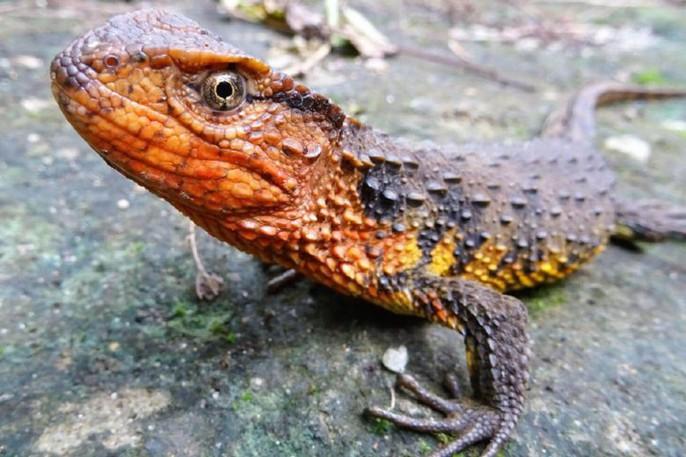 Mekong - Thánh địa của những sinh vật chưa từng thấy trên trái đất - Ảnh 1.