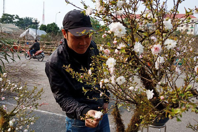 Mai trắng quý gây sốc với giá trăm triệu tại chợ hoa Tết đất cố đô - Ảnh 3.