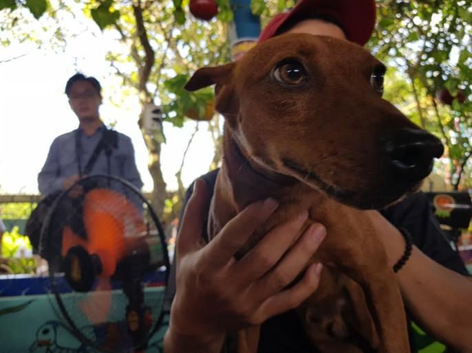 Ngắm dàn chó đắt tiền từ khắp nơi về miền Tây thi chó đẹp - Ảnh 10.
