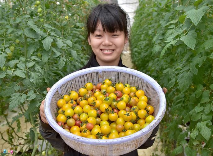 Nhà giàu đổ xô lên Măng Đen trồng rau sạch, thuốc quý - Ảnh 4.